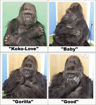Digital Addicts Koko the Gorilla Dead
